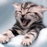 cute_kittens_7_